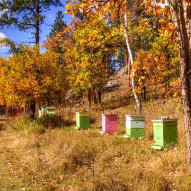 Honey Bee Hives at Yak Ridge Cabins and Farmstead