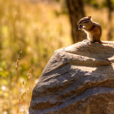 Chipmunks are among the many types of wildlife guests can see from their cabins
